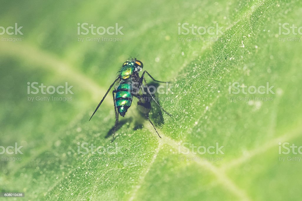 Small Green Fly On Leaf stock photo