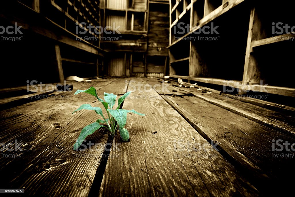 Small green plant growing between the gap in wooden flooring stock photo