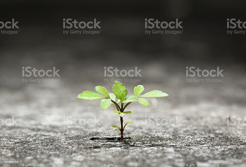 Small green plant growing from crack in concrete stock photo