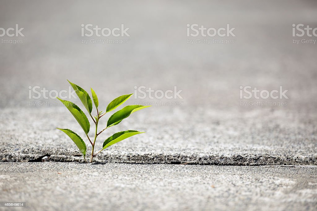 Small green plant growing through concrete for new life stock photo