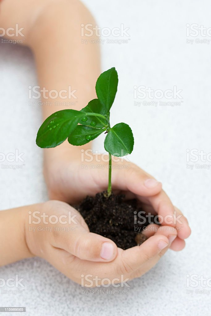 Small green plant in children's palms, over white royalty-free stock photo