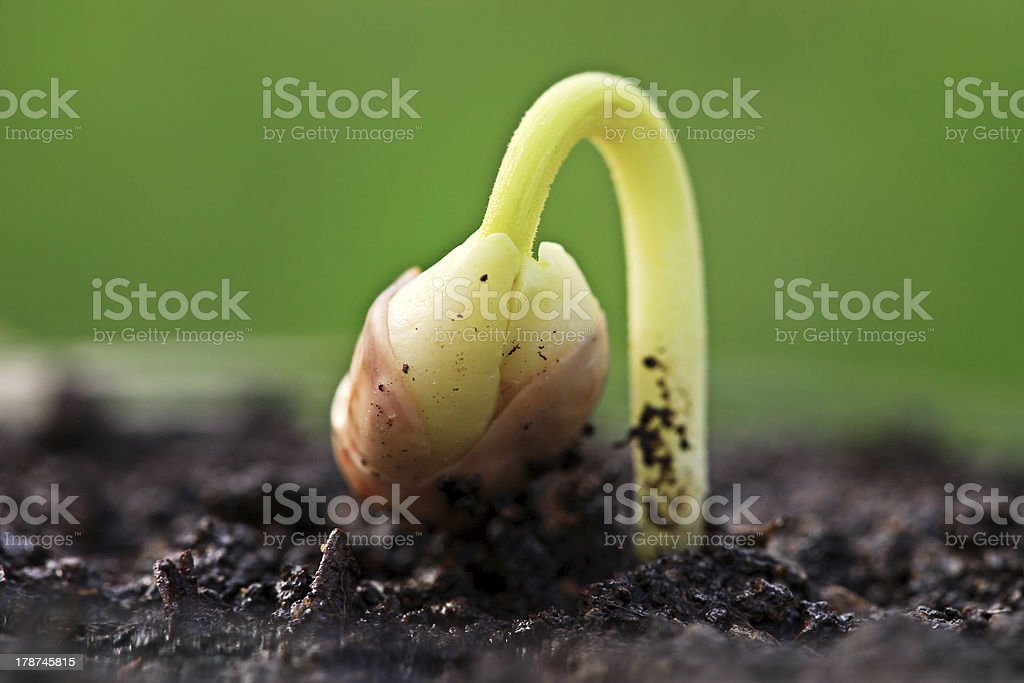 Small green plant in soil. stock photo