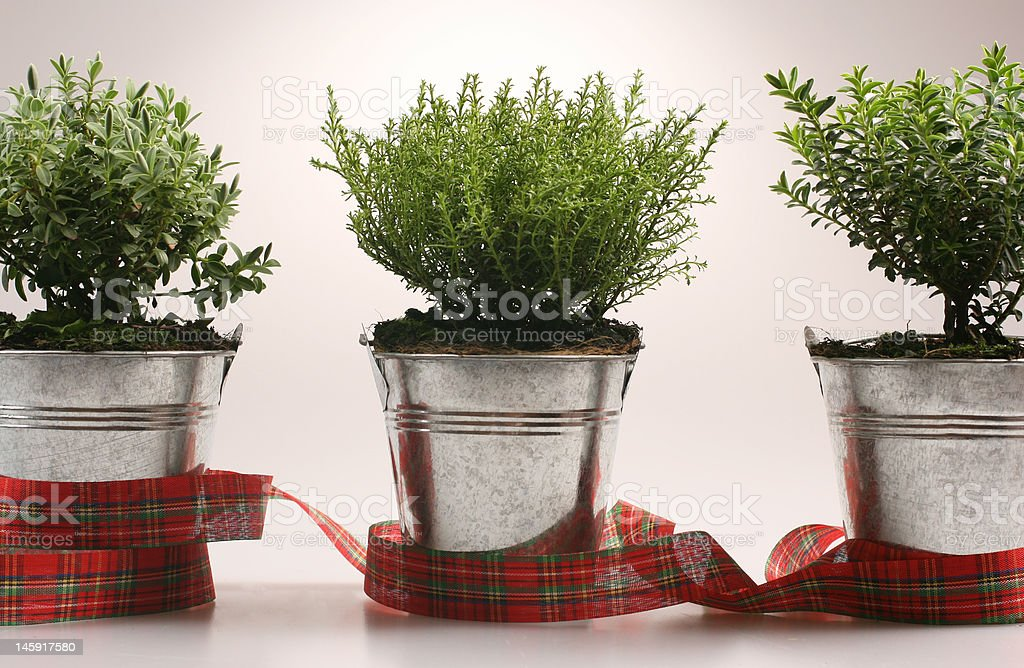 Small green plants in silver flower pot royalty-free stock photo