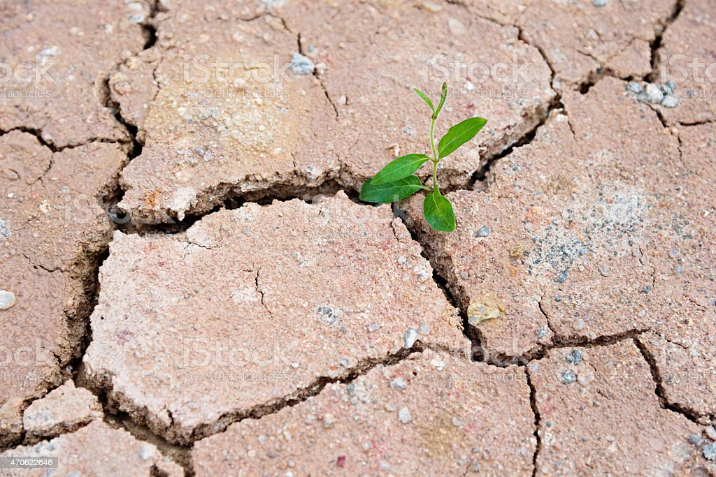 Small green sprout growing from dry land stock photo