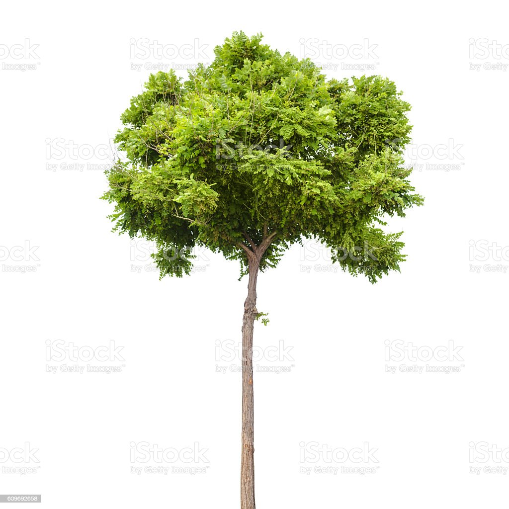 Small green tree isolated on white stock photo