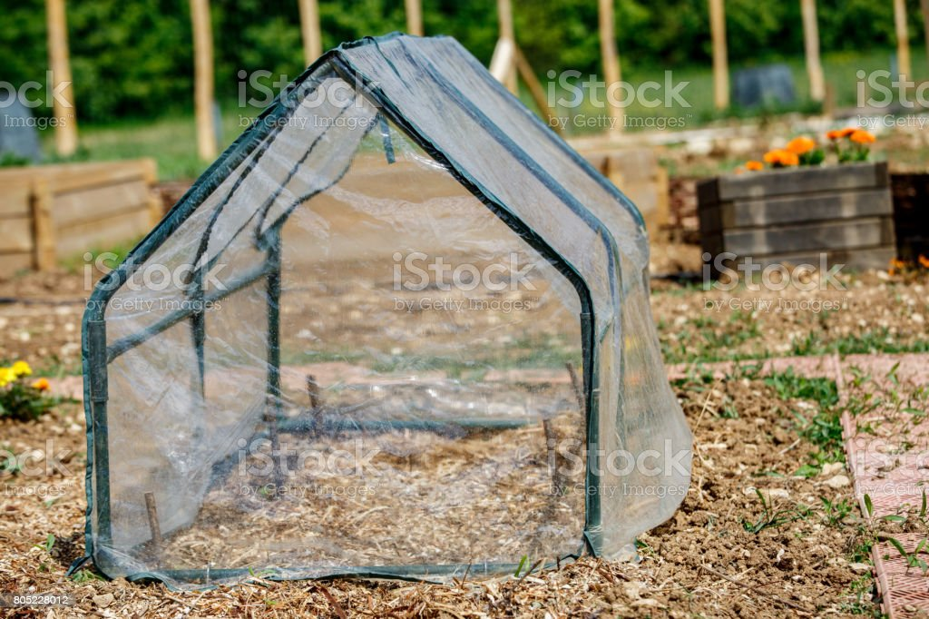 small greenhouse for vegetable seedlings in the spring garden stock photo
