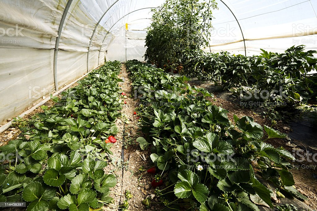 Small Greenhouse stock photo
