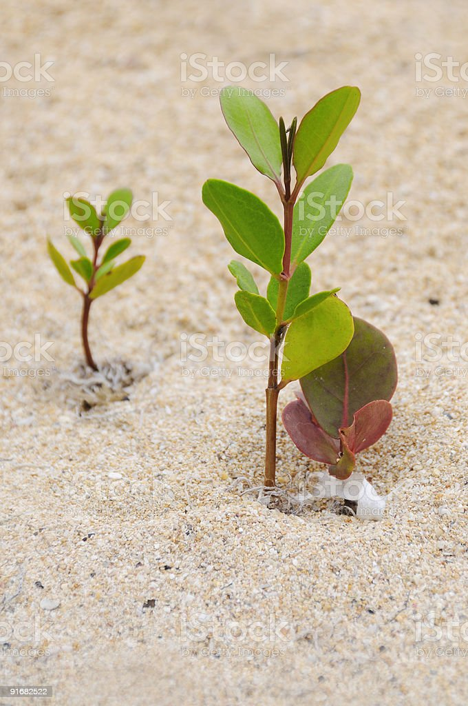 Small growing trees stock photo