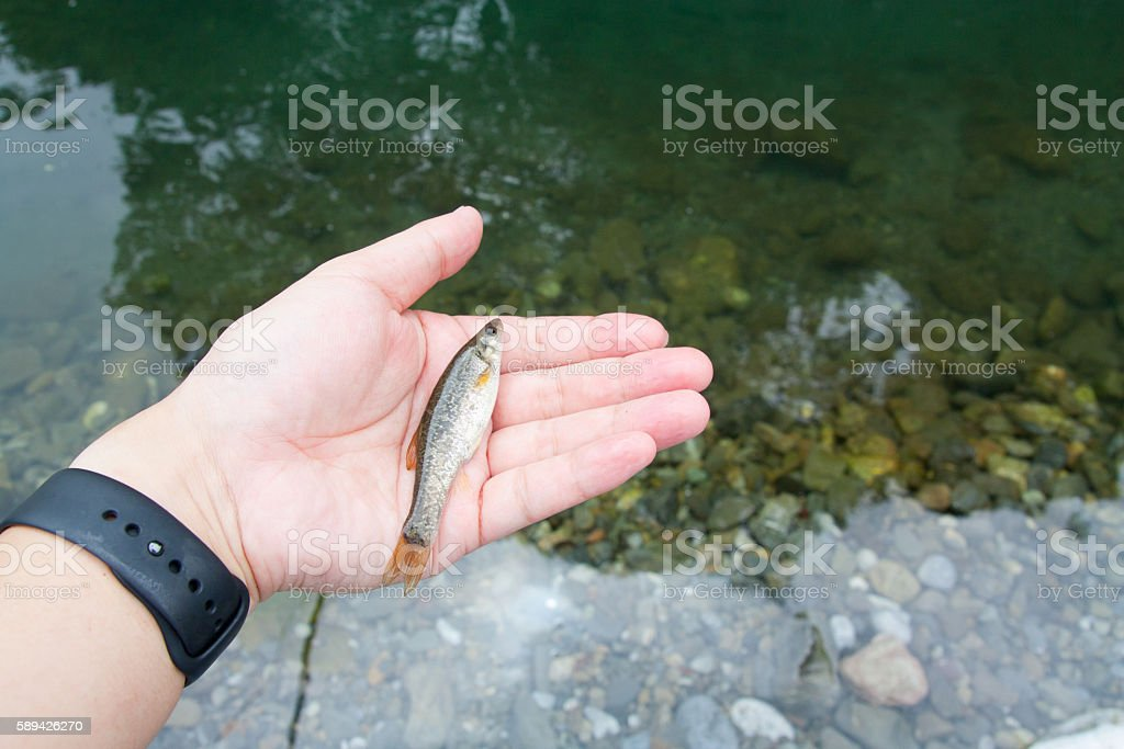 small harvest obtained in the Japan of the river stock photo