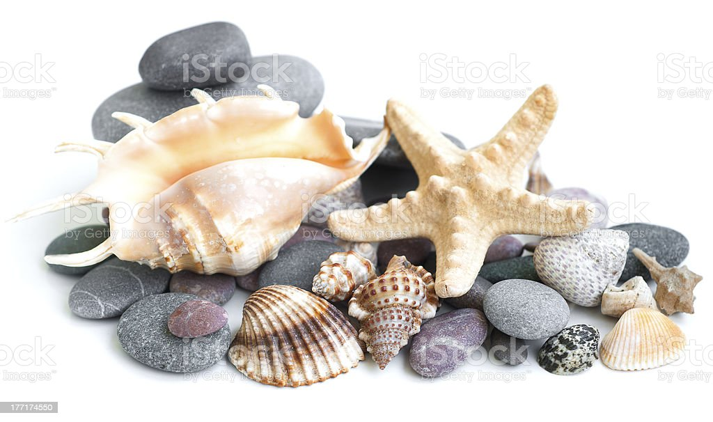 Small heap of sea stones and beige cockleshell royalty-free stock photo