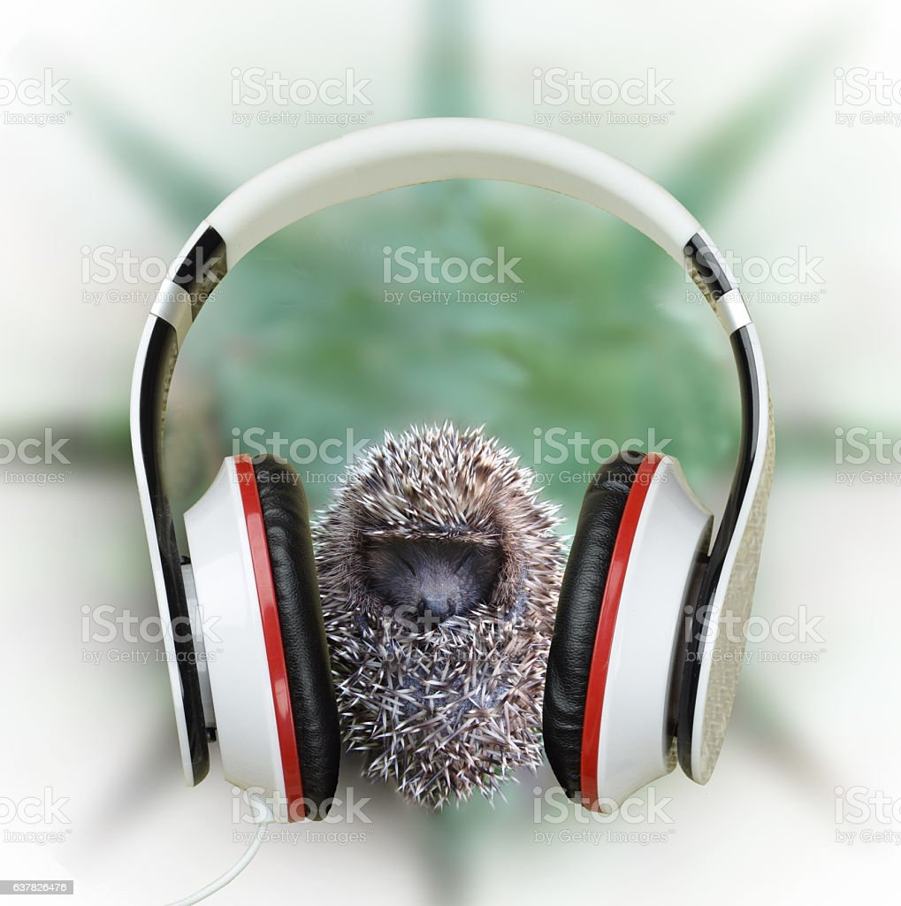 Small hedgehog in headphones listening to music. Concept. Relaxation. stock photo