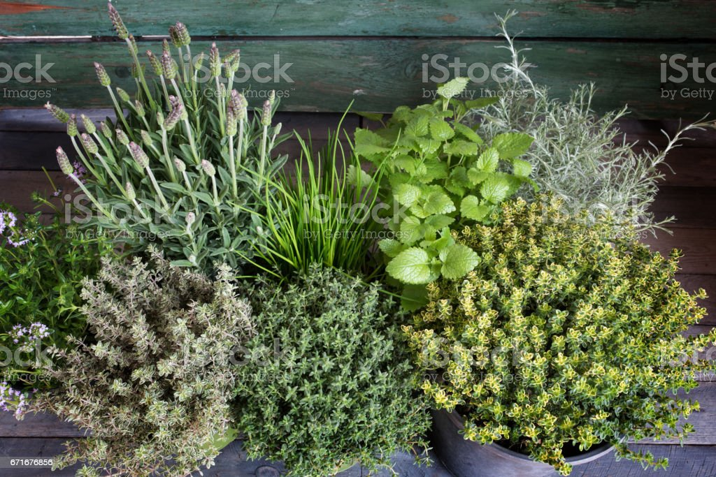 Small herb garden on wood stock photo