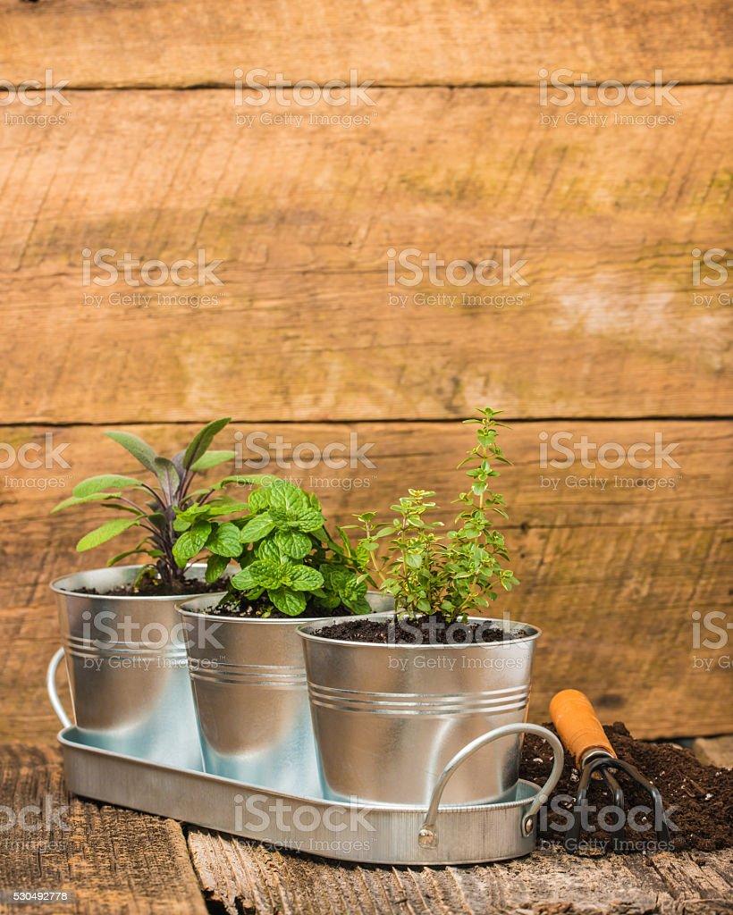 Small Herb Garden Portrait stock photo