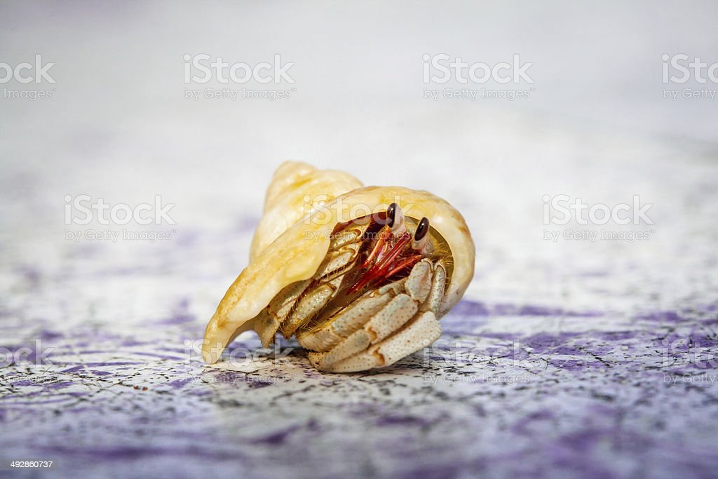 Small Hermit Crab of Cinnamon Island, Maldives royalty-free stock photo