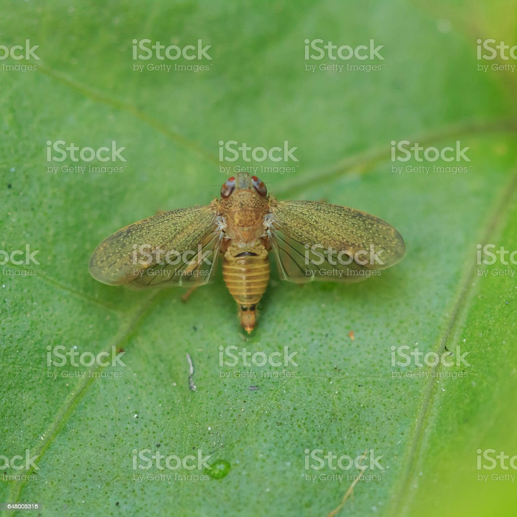 small insect on green leaf, Macro photo stock photo