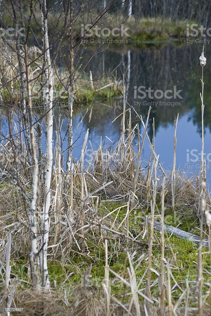 small island in forest lake stock photo