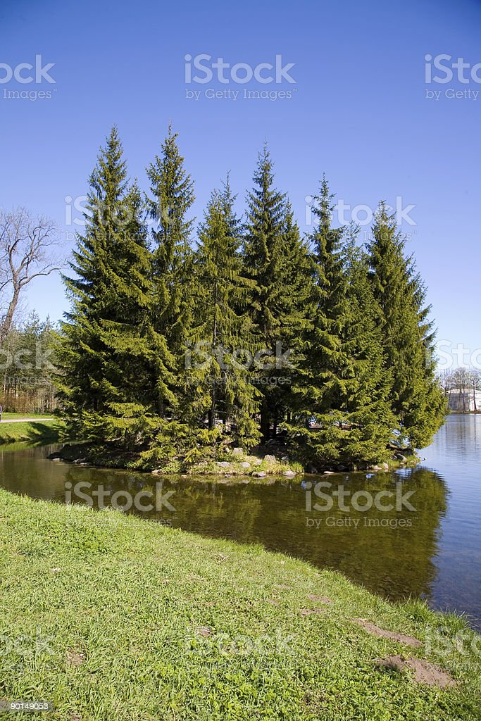 small islet with high firs royalty-free stock photo