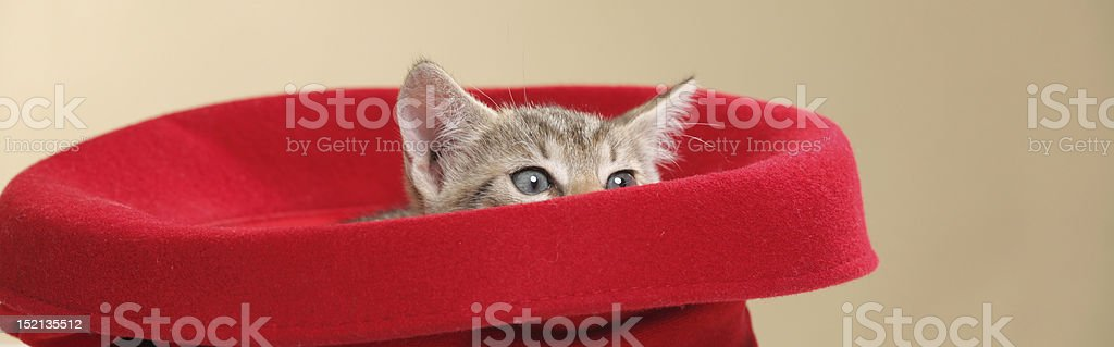 small kitten in a red hat royalty-free stock photo