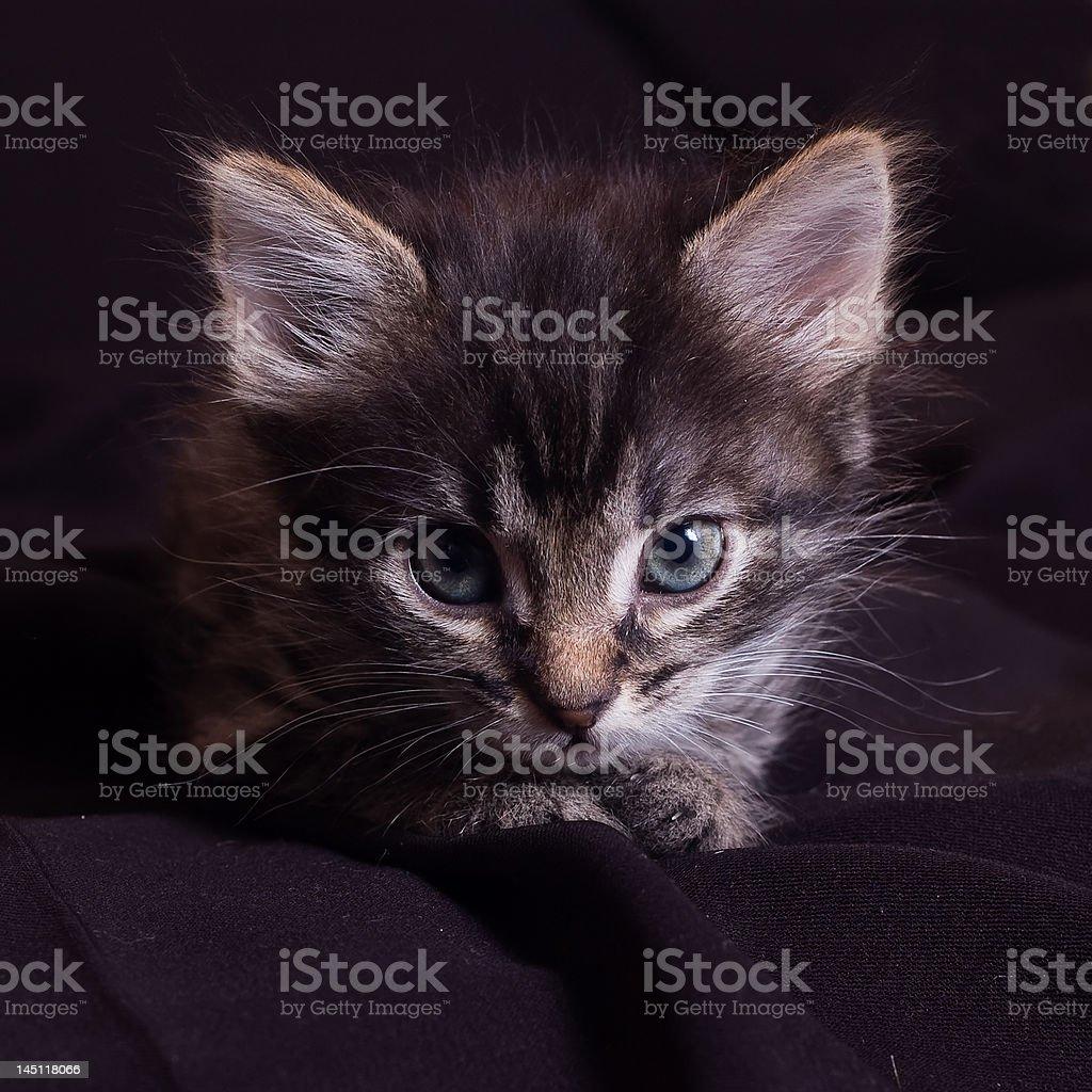 Pequeno filhote de gato. foto royalty-free