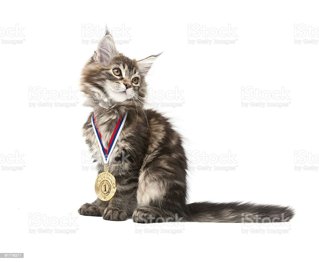 small kitten with gold medal royalty-free stock photo