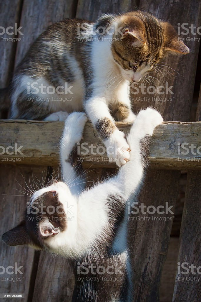 small kittens royalty-free stock photo