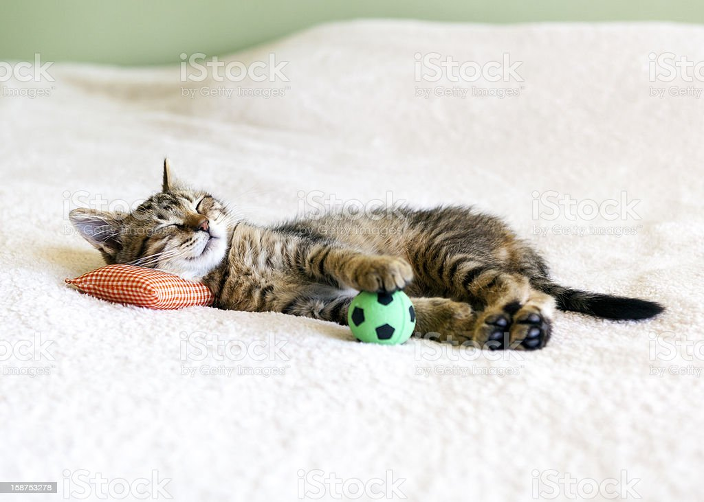 Small Kitty With Red Pillow And Soccer Ball royalty-free stock photo