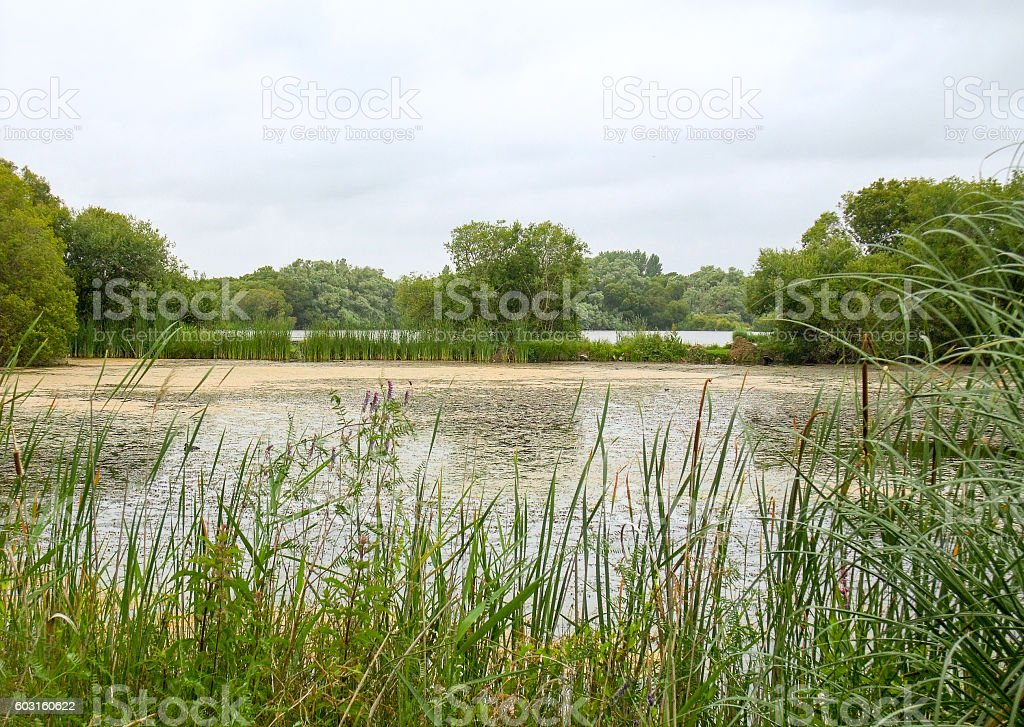 small lake in Brittany stock photo