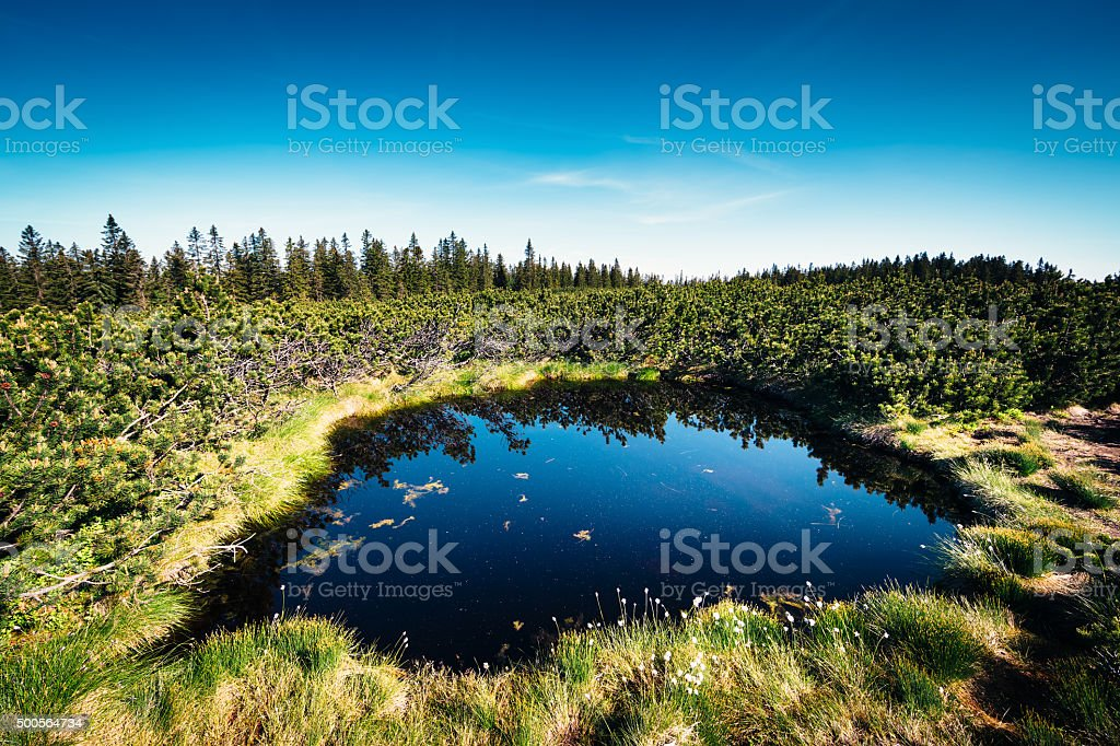 Small Lake In The Mountains Surrouded By Pine Trees stock photo