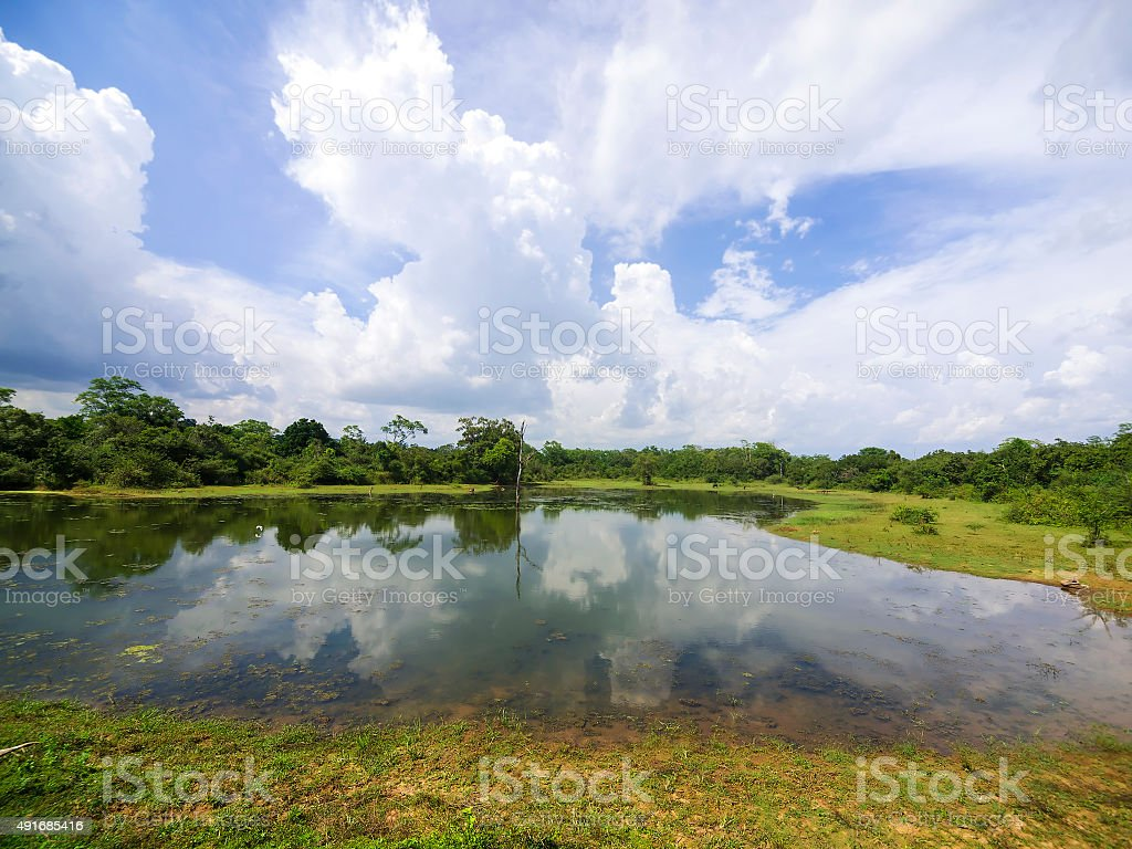 Small lake in Udawalawe National Park, Sri Lanka stock photo