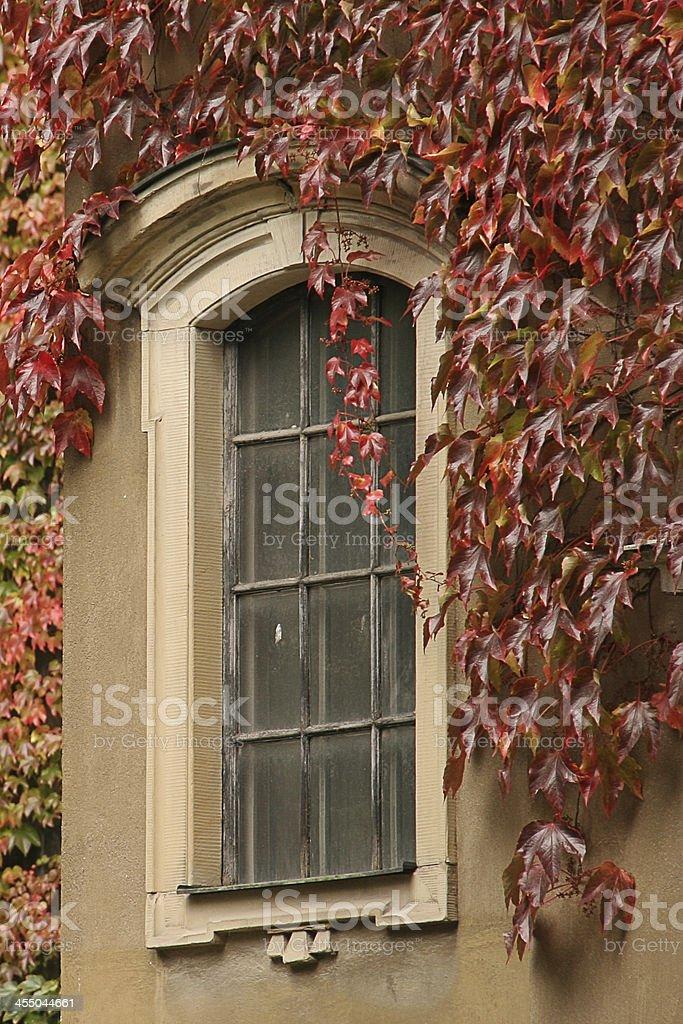 Small lattice window overgrown by autumn ivy royalty-free stock photo