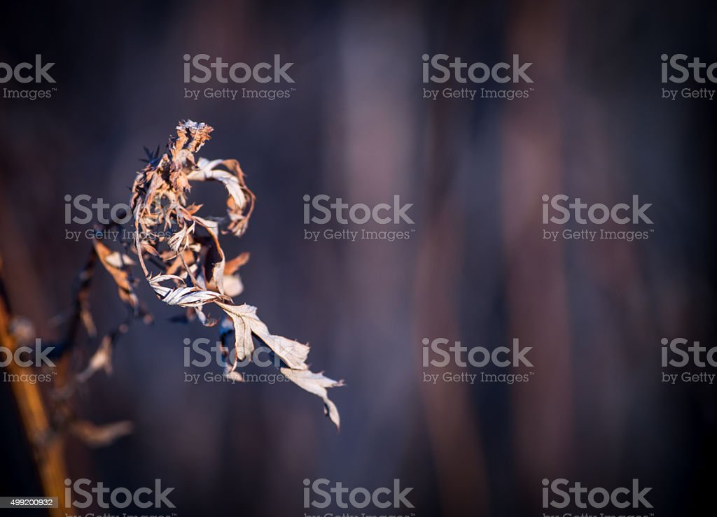 small leaf dry grass stock photo