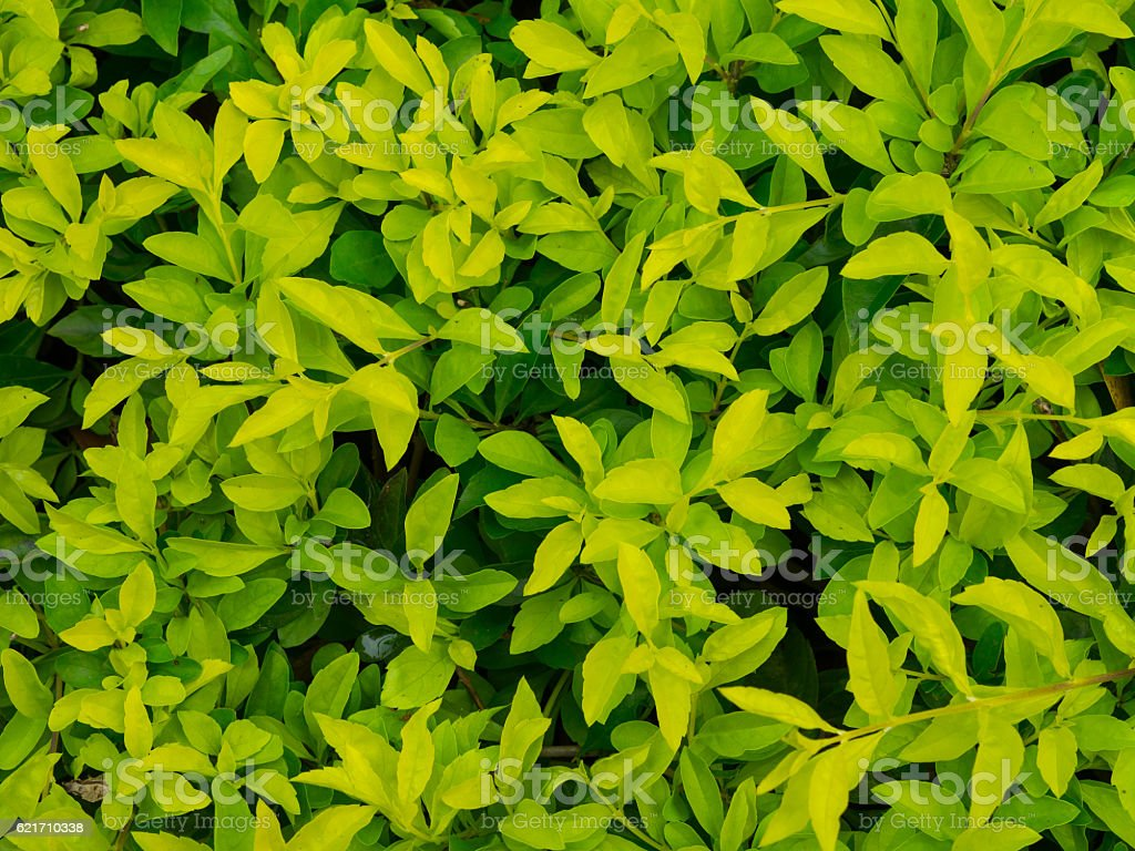 Small leafs royalty-free stock photo