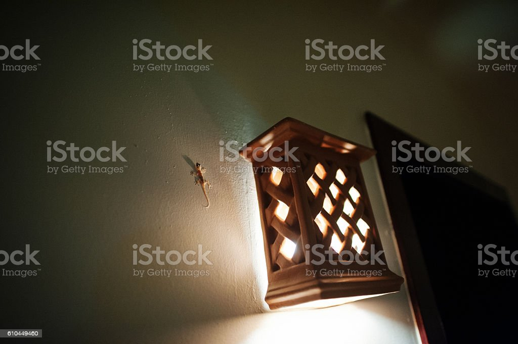 Small lizard on the wall near lantern at night stock photo