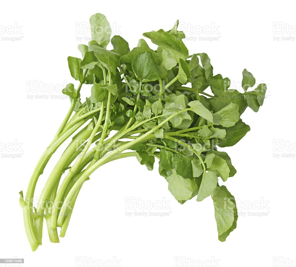 A small loose bunch of watercress curved to right, on white stock photo