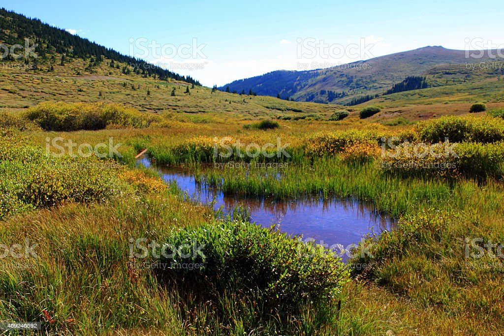 Small marsh in mountain valley stock photo