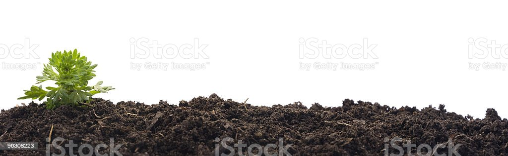 Small moss growing from soil (XXL) royalty-free stock photo