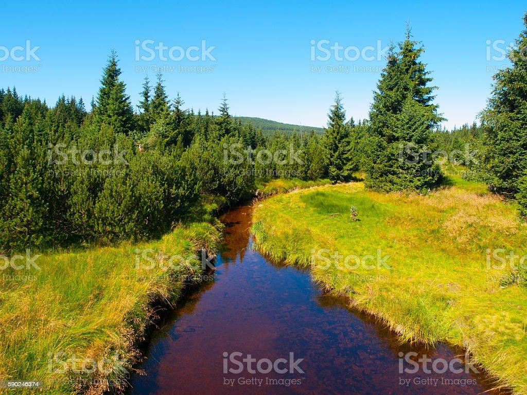 Small mountain creek on sunny day stock photo