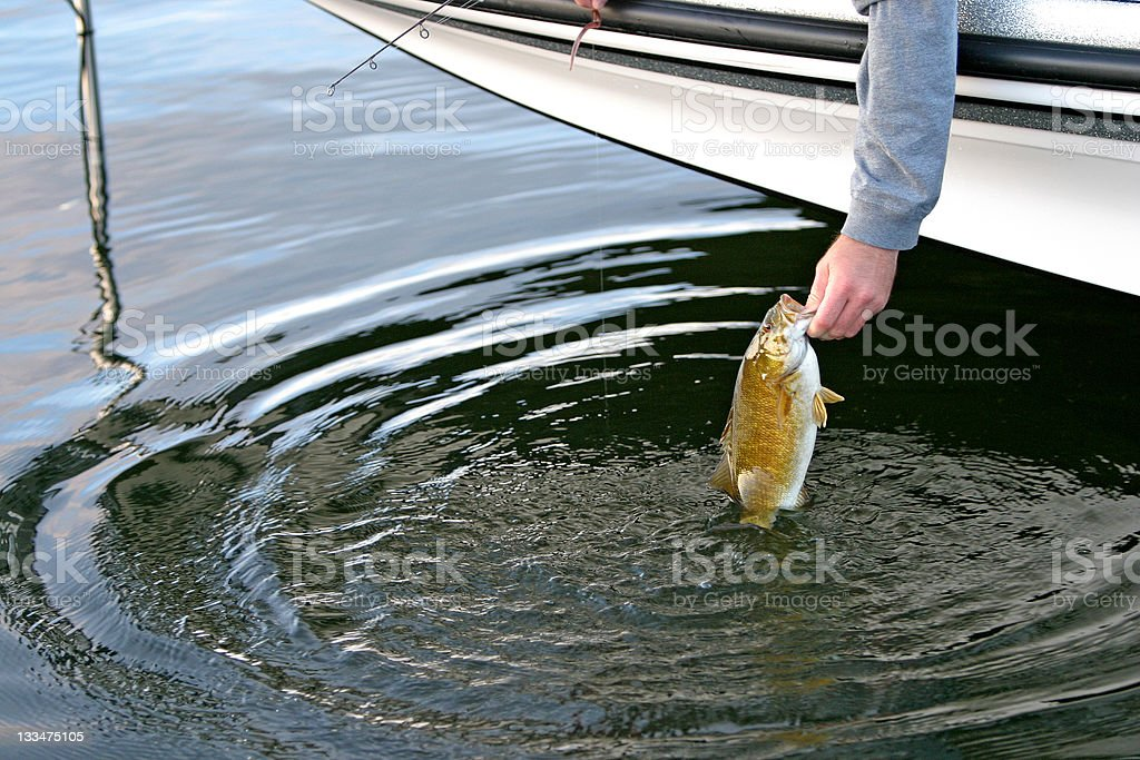 small mouth bass royalty-free stock photo