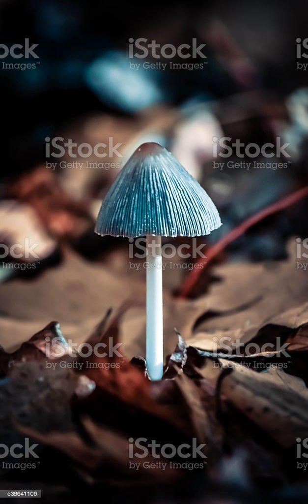 small mushroom in autumn foliage closeup stock photo