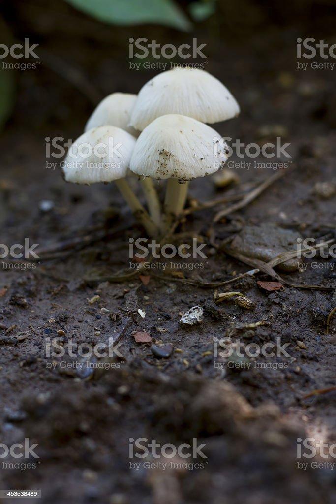 Small Mushroom stock photo