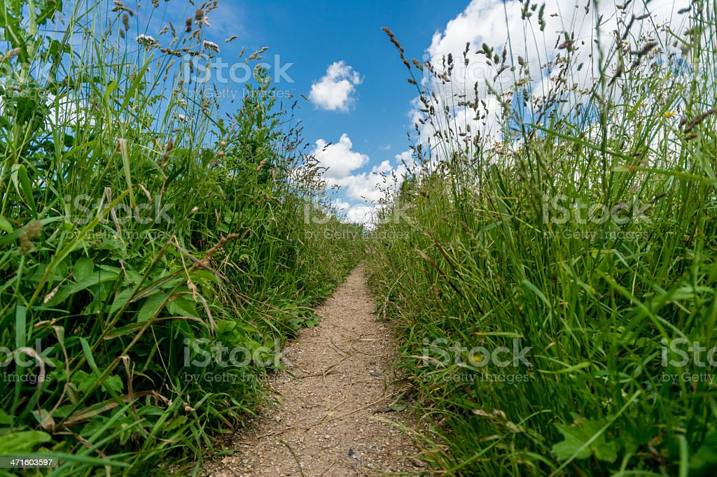 Small Nature path with high plants royalty-free stock photo