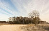 Small oak tree in a frozen winter field. Beautiful landscape.