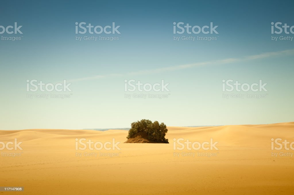 Small oasis in Libyan Sahara desert stock photo