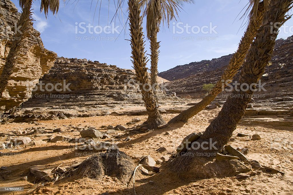 Small oasis on Sahara desert stock photo