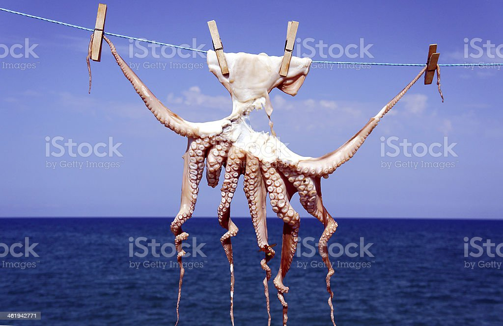 small octopus drying in the sun stock photo