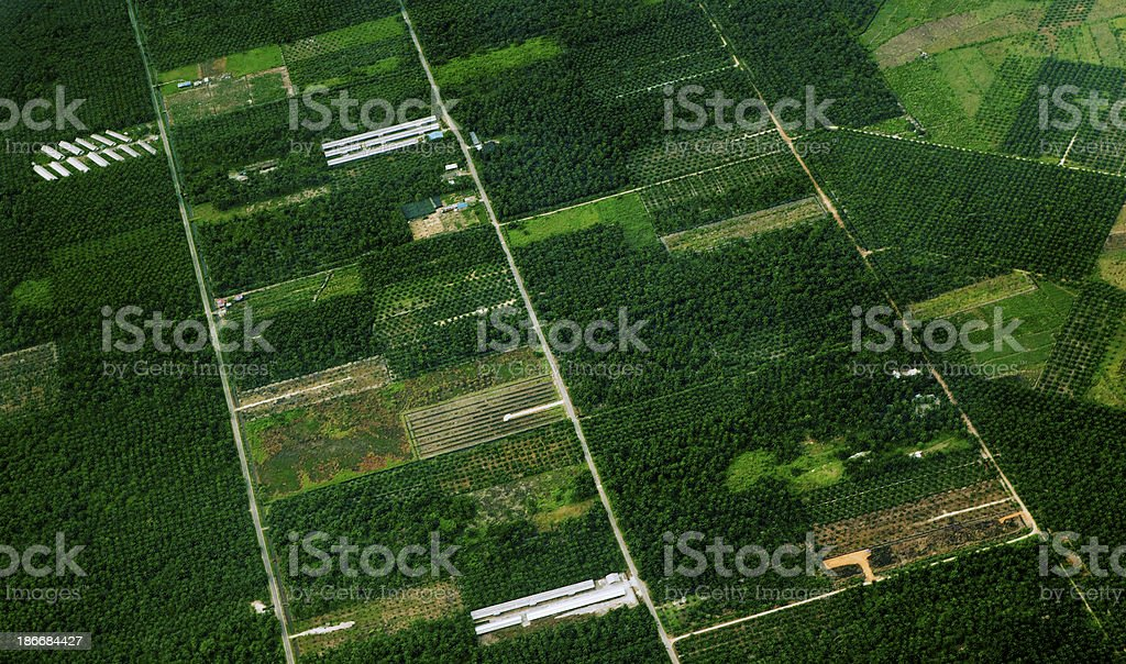 Small Oil Palm Plantations stock photo