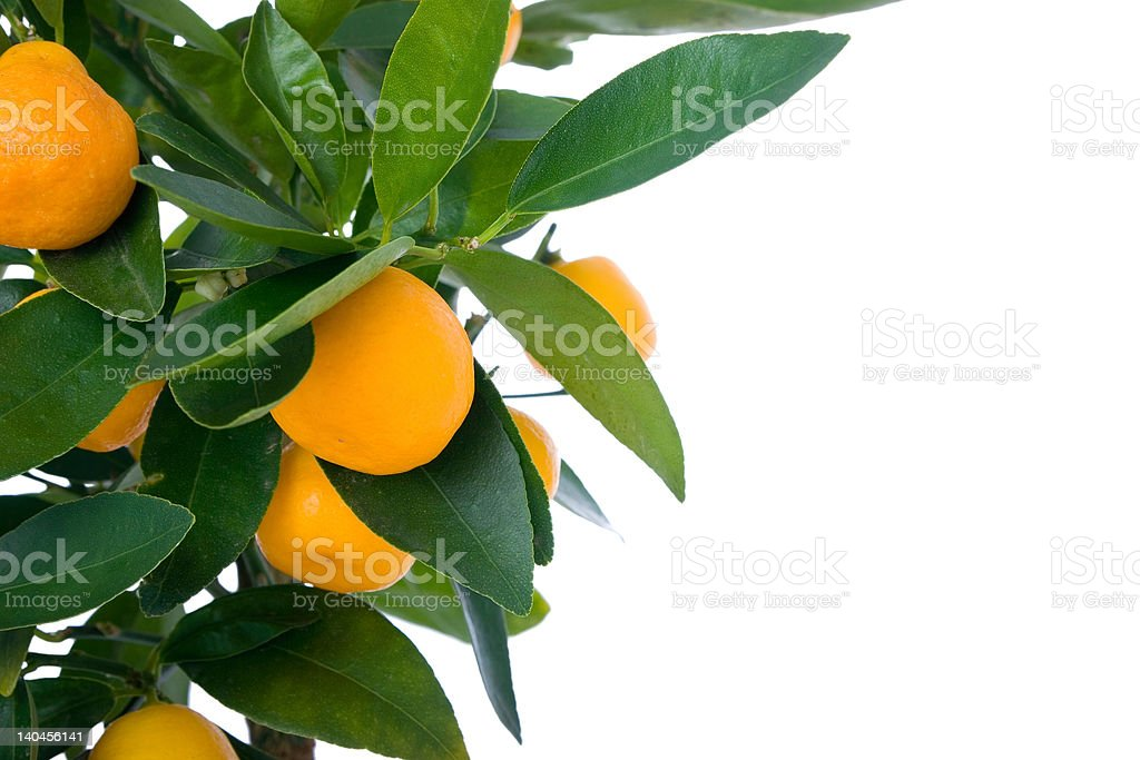 Small orange in the mids of leafes royalty-free stock photo