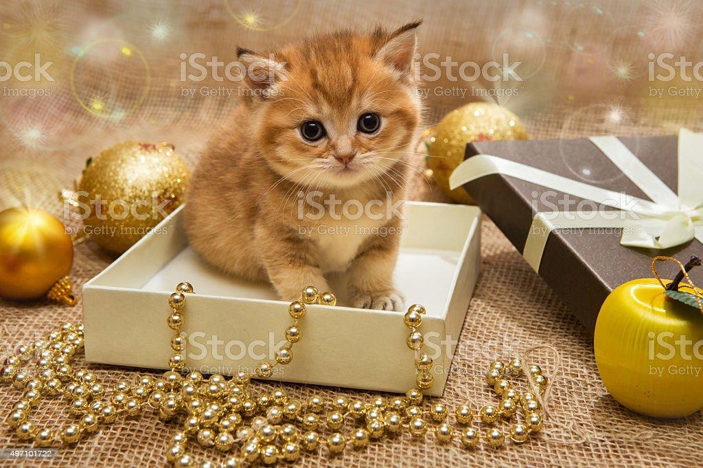 Small orange kitten  with Christmas decoration stock photo