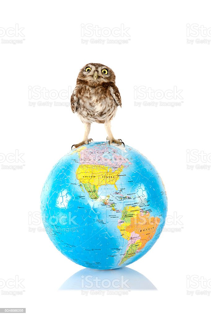 small owl standing on puzzle world stock photo
