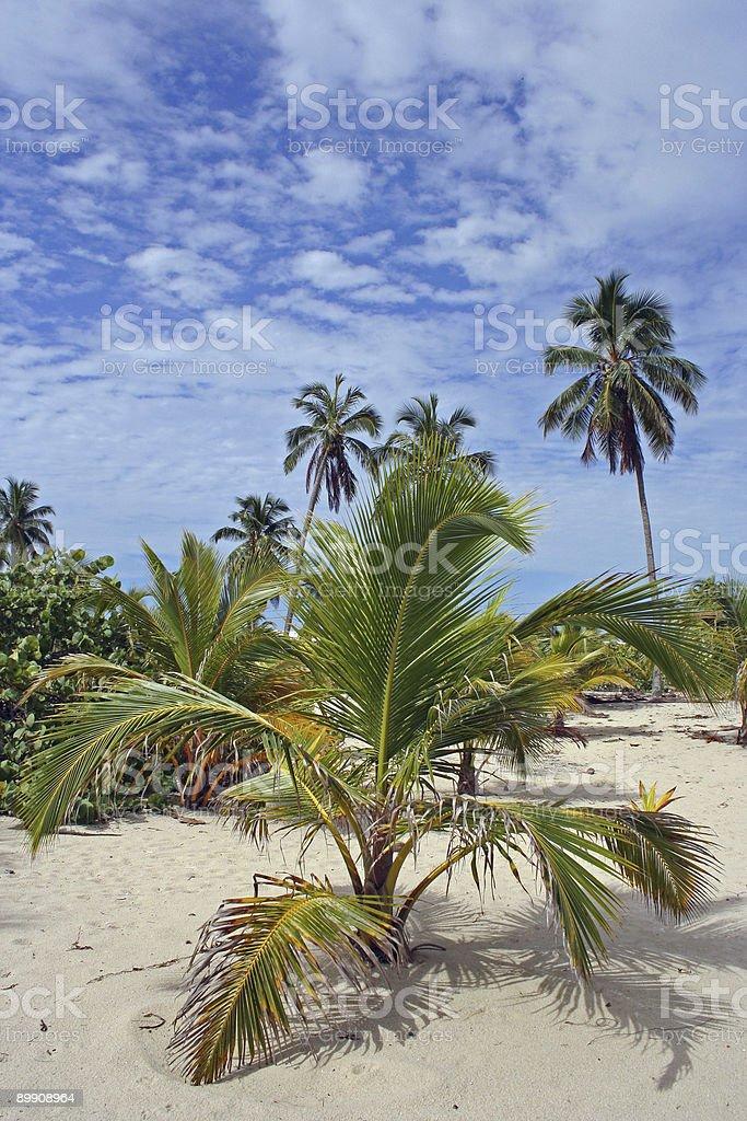 small palm tree stock photo
